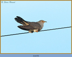 cuckoo-33.jpg