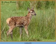 red-deer-80.jpg