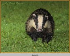 badger-19.jpg