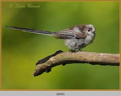 long-tailed-tit-49.jpg