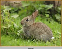 rabbit-11.jpg