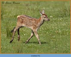 red-deer-75.jpg