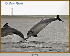 bottlenose-dolphin-08.jpg