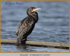 cormorant-03.jpg