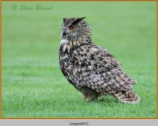 eagle-owl-07c.jpg