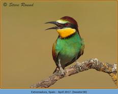 bee-eater-38.jpg
