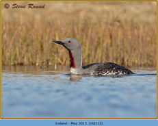 red-throated-diver-112.jpg