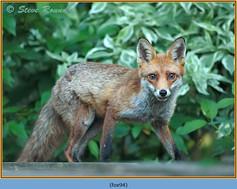 fox-94.jpg