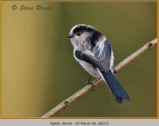 long-tailed-tit-27.jpg