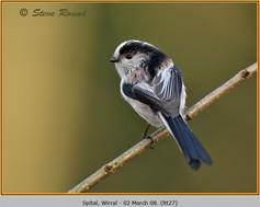 long-tailed-tit-27.jpg