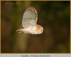 barn-owl-01.jpg