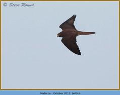 eleonoras-falcon-04.jpg