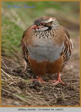 red-legged-partridge-07.jpg
