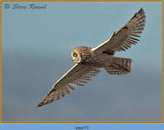 short-eared-owl-77.jpg