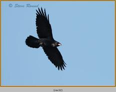 raven-32.jpg