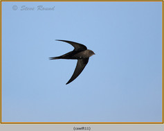 swift-11.jpg