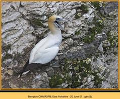 gannet-29.jpg