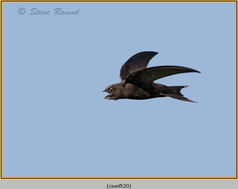 swift-20.jpg