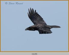raven-28.jpg
