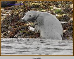 grey-seal-11.jpg