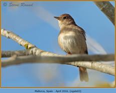 nightingale-03.jpg