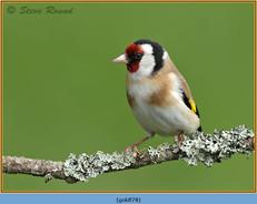 goldfinch-78.jpg