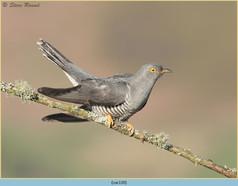 cuckoo-120.jpg