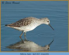 marsh-sandpiper-20.jpg