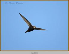 swift-06.jpg
