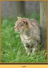 wildcat-04.jpg