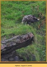 white-tailed-eagle-06.jpg