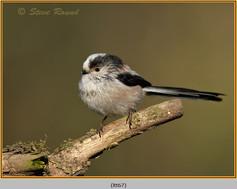 long-tailed-tit-67.jpg