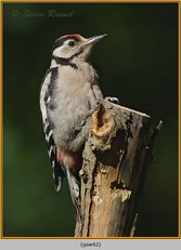 gt-s-woodpecker-42.jpg