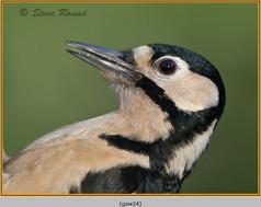 gt-s-woodpecker-24.jpg