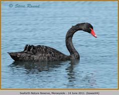 black-swan-04.jpg