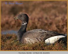 brent-goose-05.jpg