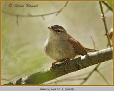 cettis-warbler-08.jpg