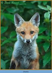 fox-92.jpg