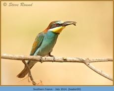 bee-eater-09.jpg