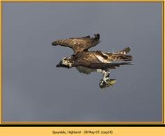 osprey-24.jpg