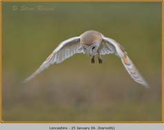 barn-owl-06.jpg