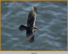 raven-12.jpg
