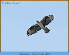 bonelli's-eagle-05.jpg