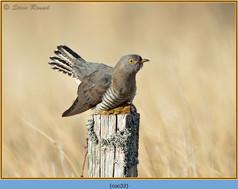 cuckoo-32.jpg