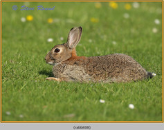 rabbit-08.jpg
