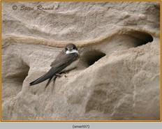 sand-martin-07.jpg