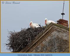 white-stork-15.jpg