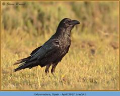 raven-54.jpg