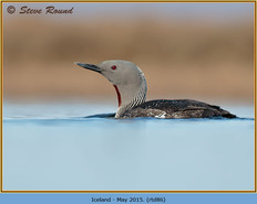 red-throated-diver- 86.jpg