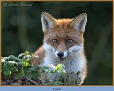 fox-60.jpg